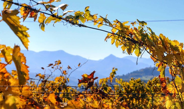 slide-autunno-in-vigna-1